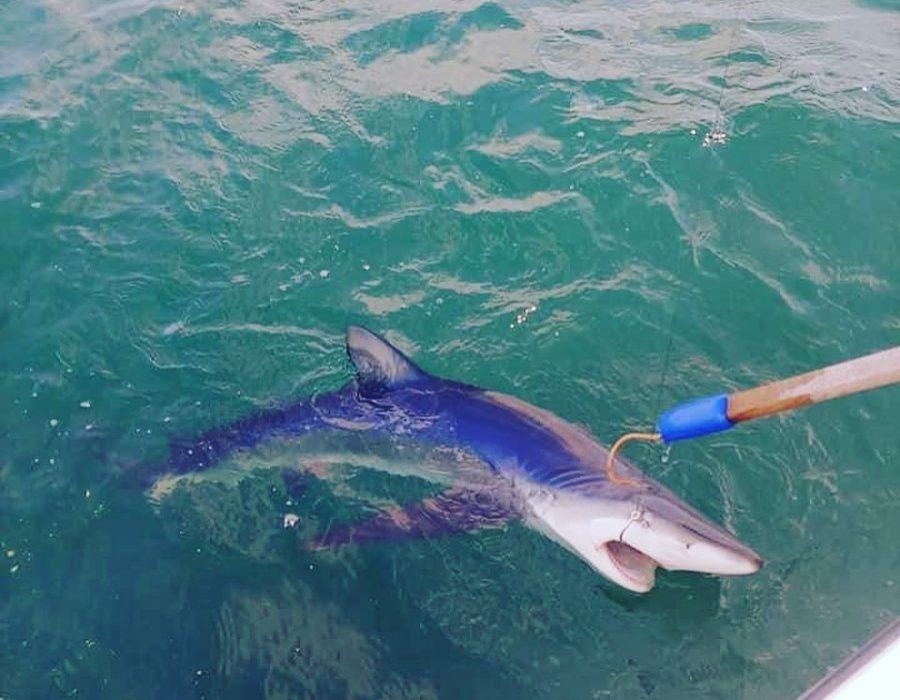 deep sea shark fishing charter maine