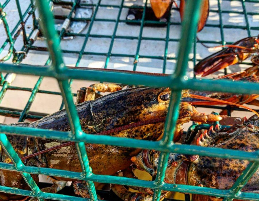 lobster tours maine